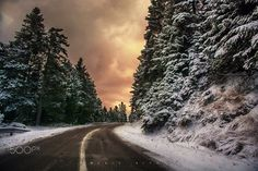 Firs at sunset. by Makis Bitos on Firs, Greece, Tourism, Country Roads, Vacation, Sunset, Amazing, Holiday, Nature