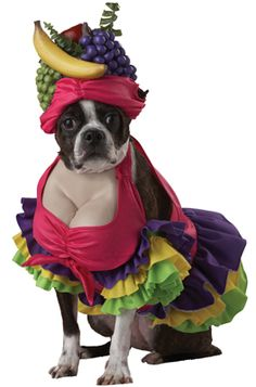 # Cha Cha Cha! Dog Costume - Pure Costumes  I just died picturing Darla in this @Brittany Trani