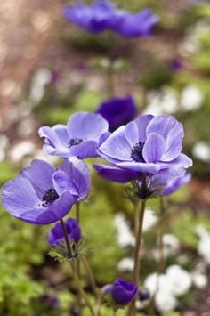 Spring Garden Tours at the Heyward-Washington House