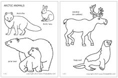 Free printable arctic polar animals to color and use for crafts and animal learning activities. A coloring page set and a colored animal set include an arctic fox, a caribou or reindeer, a hare, a harp seal, and polar bears. Ocean Coloring Pages, Fox Coloring Page, Animal Coloring Pages, Colouring Pages, Kids Coloring, Coloring Sheets, Polo Norte, Animal Templates, Printable Templates
