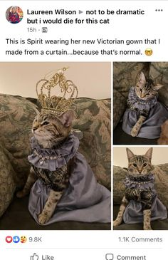 Cute Animal Memes, Cute Funny Animals, Funny Cute, Cute Cats, Animal Pictures, Cute Pictures, Amor Animal, Cute Little Animals, Cute Creatures