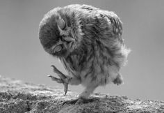 #animal #owl #cute #fun