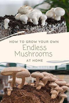 Grow Your Own Mushrooms, Growing Mushrooms At Home, Garden Mushrooms, Edible Mushrooms, Wild Mushrooms, Stuffed Mushrooms, Planting Vegetables, Growing Vegetables, Growing Plants