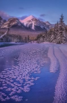 Winter blooms | Morant's curve, Banff, Canada. | Sapna Reddy Photography | Flickr