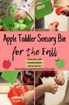 Looking for a quick way to put together a toddler apple sensory bin? The secret is always having a batch of dyed rice available, and then add pretend apples and fine motor tools! #fall #apples #sensorytable #finemotor #toddlers #age2 #teaching2and3yearolds Fall Activities For Toddlers, 3 Year Old Activities, Early Childhood Activities, Apple Activities, Autumn Activities, Sensory Activities, Infant Activities, Sensory Play, Motor Activities
