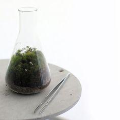 Twig Terrarium In the Genes design inspiration on Fab.
