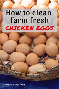 Clean Chicken, Fresh Chicken, Canned Chicken, Chicken Chick, Chicken Ideas, Fancy Chickens, Pet Chickens, Raising Chickens, Chicken Humor