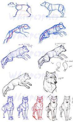 Zeichnen lernen Tutorial Hund Wolf Skizze Bleistift