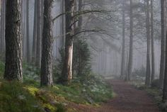 Gorgeous - early morning mist amongst the pines in the Cairngorms Scotland Places To Visit, Places To See, Dark Summer, Ghost In The Machine, My Fantasy World, Cairngorms, Scotland Travel, Scotland Trip, England And Scotland