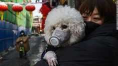 """Experts have moved to reassure pet owners, but warned the coronavirus outbreak is a """"rapidly evolving situation"""". Women In China, Number Two, Bad Timing, All Dogs, Ny Times, Pet Care, Snuggles, Dog Bowls, Dog Breeds"""