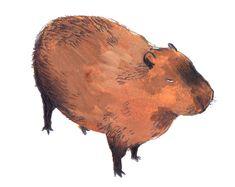 Capybara Art Print by Dawning Crow - X-Small Illustration Sketches, Character Illustration, Illustrations Posters, Cute Rats, Capybara, Fish Art, Beautiful Cats, Art Inspo, Cool Art