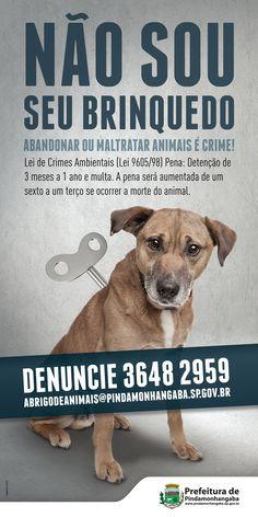 Campanha contra o abandono de animais - 2015 | Prefeitura de Pindamonhangaba
