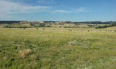 wild buffalo, Crawford Nebraska
