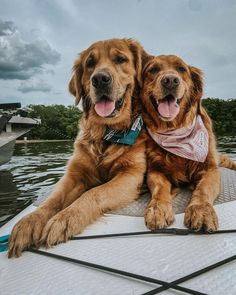 Dogs, Animals, Instagram, Animales, Animaux, Pet Dogs, Doggies, Animal, Animais