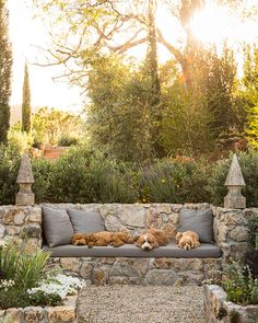 Perennial Flower Gardening - 5 Methods For A Great Backyard Pip, Clara, And Max Nap On A Built-In Sofa Surrounded By Herb And Vegetable Beds In This Mediterranean-Inspired Oasis Designed By Landscape Architect Scott Shrader. Agave Salmiana And Olive Trees