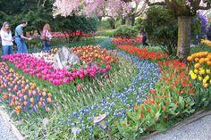 Etonnant Roozen Bulb Garden