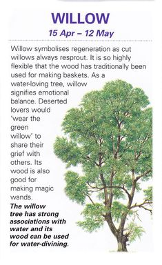 Sacred celtic trees Willow. Willows are beautiful, supple and bend with the storms so they don't break.: