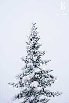 Christmas tree #winter #snow #xmas #Finland