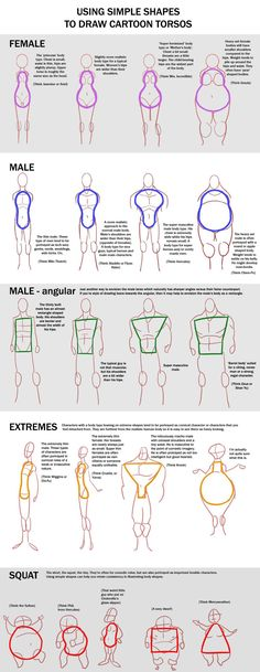 Using simple shapes to draw cartoon torsos http://macawnivore.deviantart.com/art/Chart-Cartoon-Torso-257832903