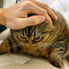 10 Warning Signs of Cancer in Cats That Every Owner Should Know' property='og:title Funny Cats, Funny Animals, Cute Animals, Cancer In Cats, Derpy Cats, Cat Expressions, Cat Diet, Dancing Cat, Cat Names
