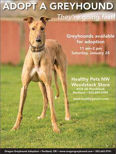 Greyhound Adoption Event, Saturday, January 24