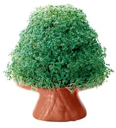 Chia Tree Chia Pet, Ceramics Ideas, Clay Projects, House Plants, Pets, Awesome, How To Make, Vintage, Gardening