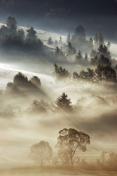 Morning.  by Marcin Sobas.  (Something out of a book!)