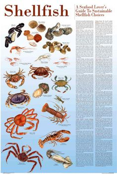 For those who love to eat shellfish, our Shellfish chart identifies smart choices. These species, the most common commercial species available throughout the continental USA and Canada, are grown and. Spot Prawns, Blue Catfish, Fish Chart, Sustainable Seafood, All Fish, Fishing Guide, Fish Print, Hanging Art, Bird Prints