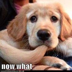 Estas fotos de partes de peliculas me hacen quedar mal!!!!! Que perro glamouroso se chupa la cola!!!!