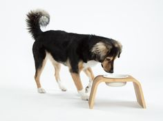Modern Dog Feeder   Pine Stand   Porcelain Bowls