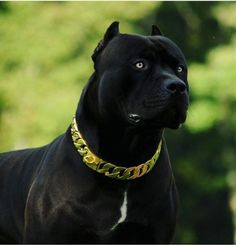 """when I see an image of these dogs.I think """" they are the Guardians Amstaff Terrier, Pitbull Terrier, Big Dogs, Cute Dogs, American Stafford, Scary Dogs, Cane Corso Dog, American Pitbull, Bully Dog"""