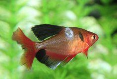 How to Cure Fungus on Aquarium Fish - Aquarium Co-Op Freshwater Aquarium, Aquarium Fish, Cory Catfish, King Food, Betta Fish Tank, Baby Fish, Small Fish, Fungal Infection, African Cichlids