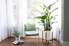 Bird of Paradise (Extra Large) - Potted Plants, Delivered by Léon & George - Premium Online Plant Shop Bathroom Red, Old Bathrooms, Bathroom Plants, Bathroom Colors, Tropical House Plants, Tropical Leaves, Birds Of Paradise Plant, Apartment Makeover, Modern Shower