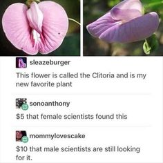 I like me some fine humor in the evening - seriously though, how hard can it possibly be to find the clitoris? I mean it's right fuckin there pal.