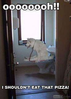 """Funny Dog Meme: Not your grandfather's definition of """"dog dew."""""""