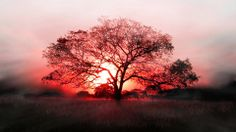 Red Black Tree Sunset