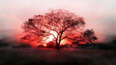 Red Black Tree Sunset