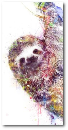 Courtside Market Sloth Gallery-Wrapped Canvas Wall Art - 12 x 24 - Multi 71142869131279153 Animal Paintings, Animal Drawings, Sloth Tattoo, Fox Illustration, Cute Sloth, Watercolor Animals, Botanical Art, Spirit Animal, Framed Art Prints