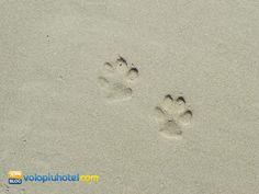 Impronte di cane sulla spiaggia
