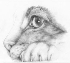 Cat by SandraWhite on DeviantArt - - Cat by SandraWhite on DeviantArt Katzen Cat by SandraWhite on DeviantArt
