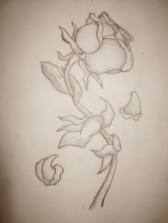Drawing of a rose..  The leaves were really irritating me, haha