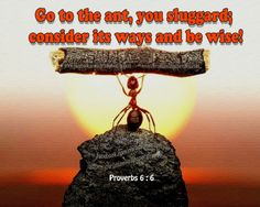 Download HD Christian Bible Verse Greetings Card & Wallpapers Free: Proverbs 6:6 how to be wise? Learn from Ant
