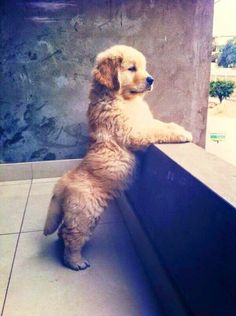 The Friendly Fur : Top 10 Most Obedient Dog Breeds