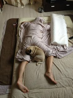 Typical night for any pug owner!