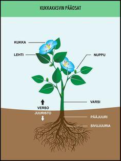 Kukkakasvin pääosat