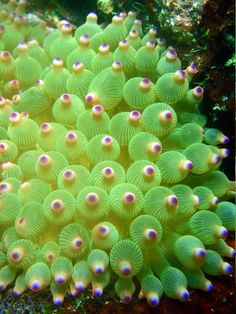 Deal with that outfit for a moment Underwater Creatures, Ocean Creatures, Underwater World, Underwater Plants, Marine Aquarium, Reef Aquarium, Beautiful Sea Creatures, Sea Anemone, Water Life