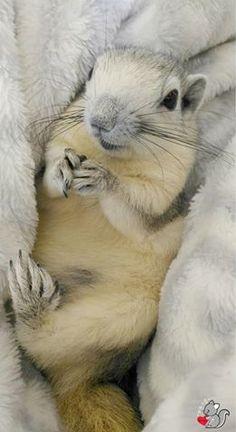 Squirrel, Rabbit, Animals, Bunny, Rabbits, Animales, Animaux, Squirrels, Bunnies