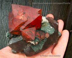 Fluorine Octaédre rouge avec Quartz Fumé du Mont Blanc, France (pièce de Robert Brandstatter)