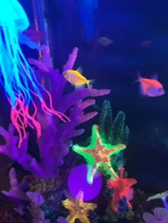 Light Up Under the Sea Decor and Unique Whimsical Finds by KatieJoArtsy Jellyfish Aquarium, Saltwater Aquarium, Freshwater Aquarium, Aquarium Fish, Saltwater Tank, Free Wallpaper Backgrounds, Iphone Wallpaper Video, Cool Fish Tank Decorations, Fish Gif