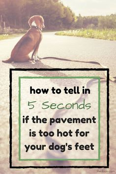 It might come as a surprise to even the most type-A pup owners that the very pavement beneath your dog's paws could be sizzling hot. Here's how to tell.
